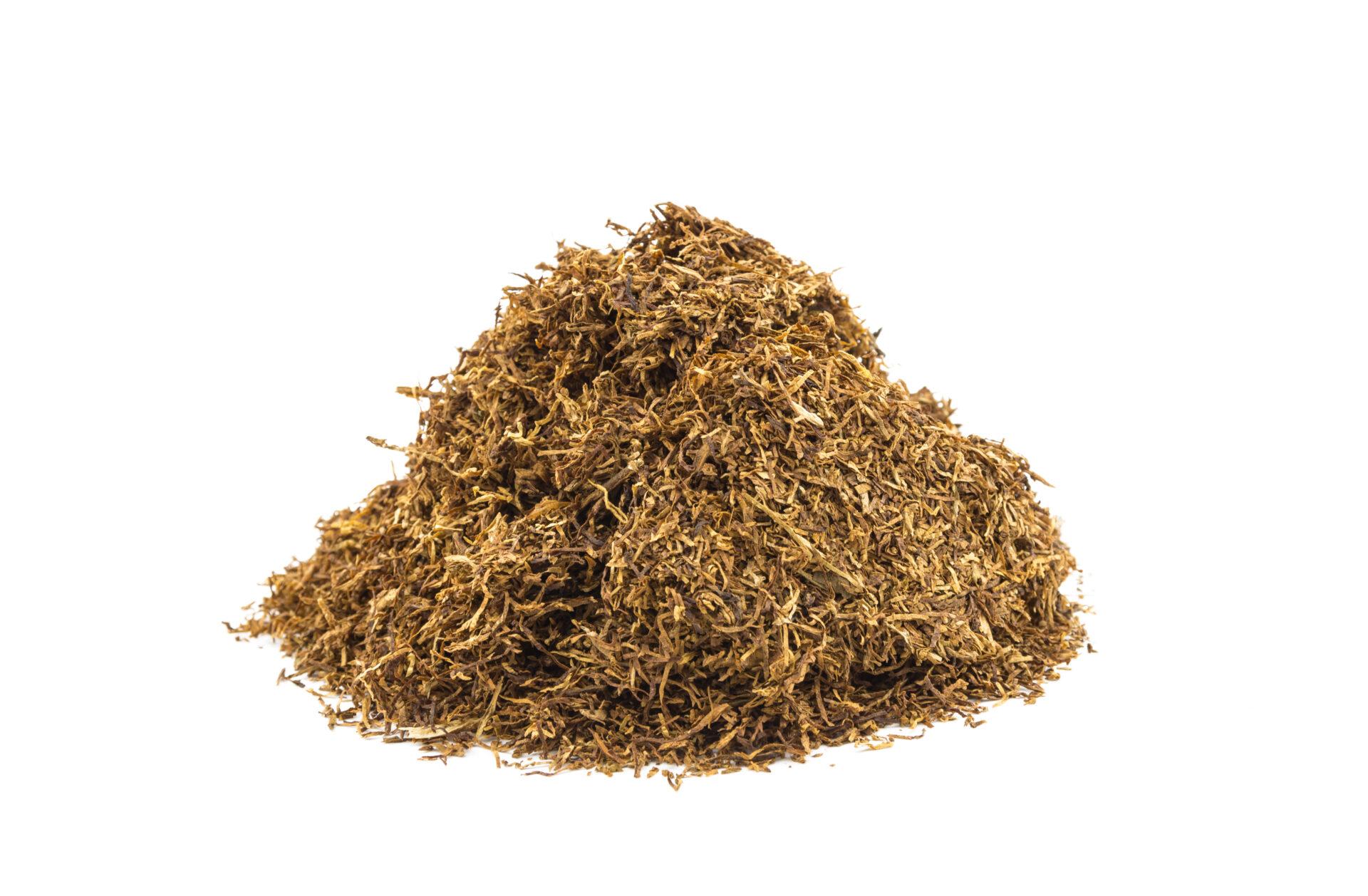 tytoń korsarz średni